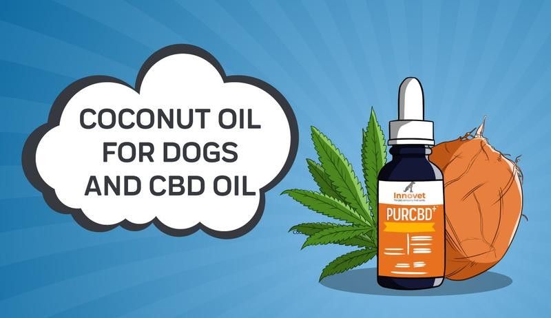 10 Attractive Methods To Boost Your Cbd Oil For Pets