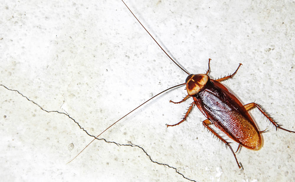 Houston Pest Management Companies